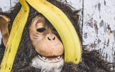 Wist je dat je soms net een aapje bent?